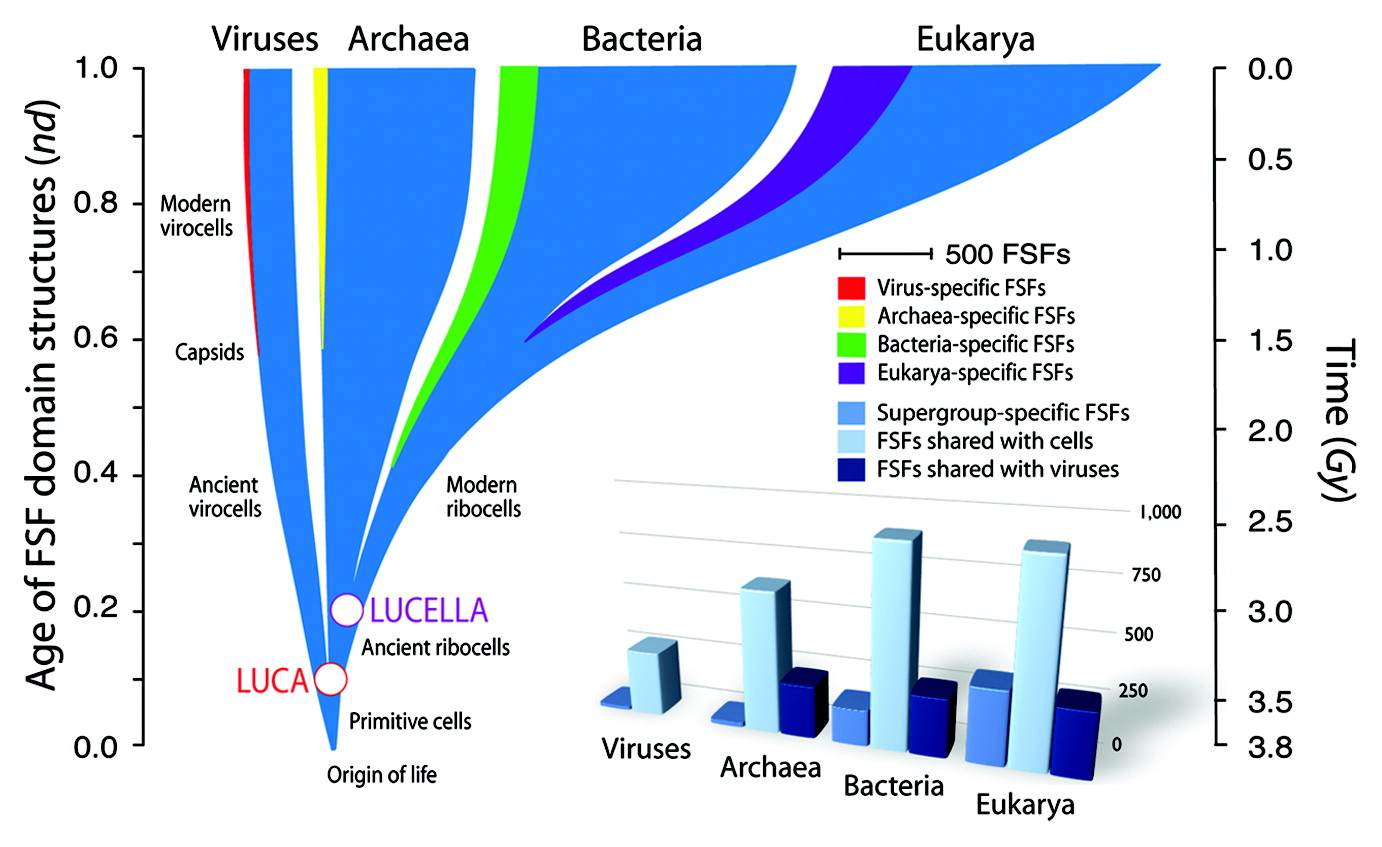 A universal tree of life of Nasir et al. inferred from a phylogeny of protein domains.