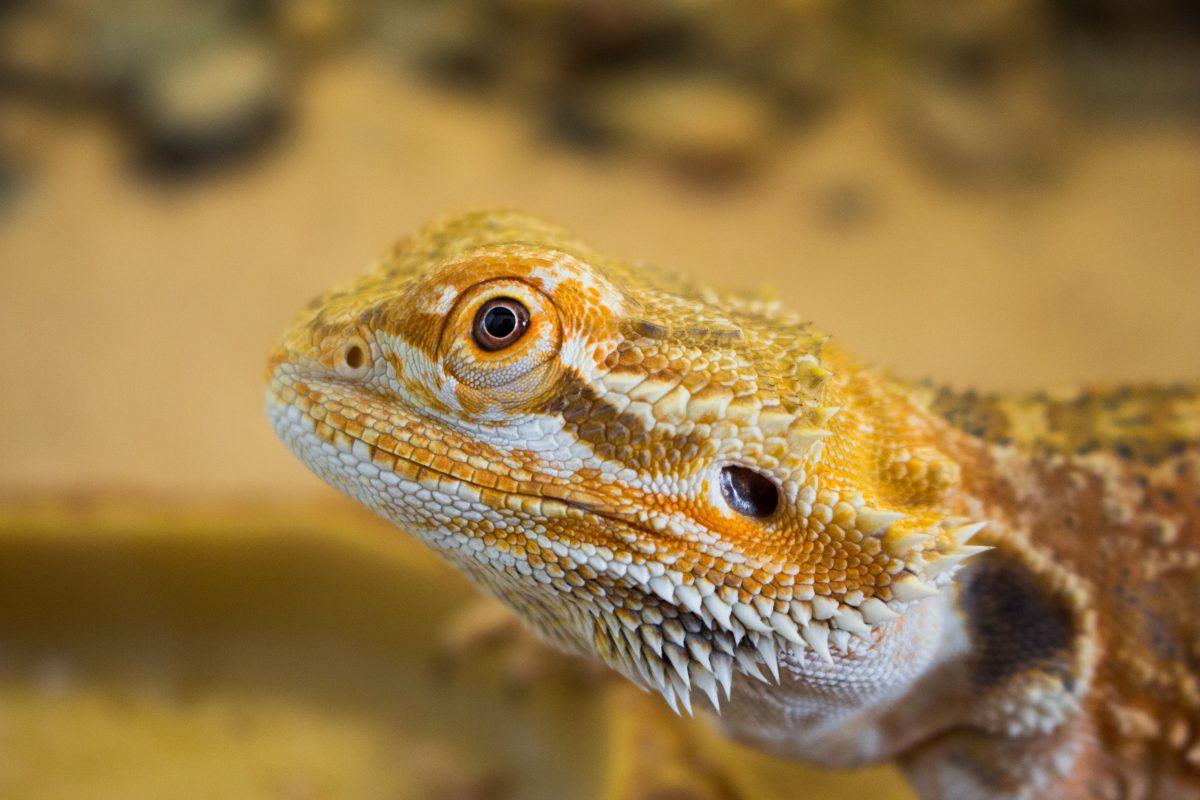 Taming the Lizard Brain - Quillette