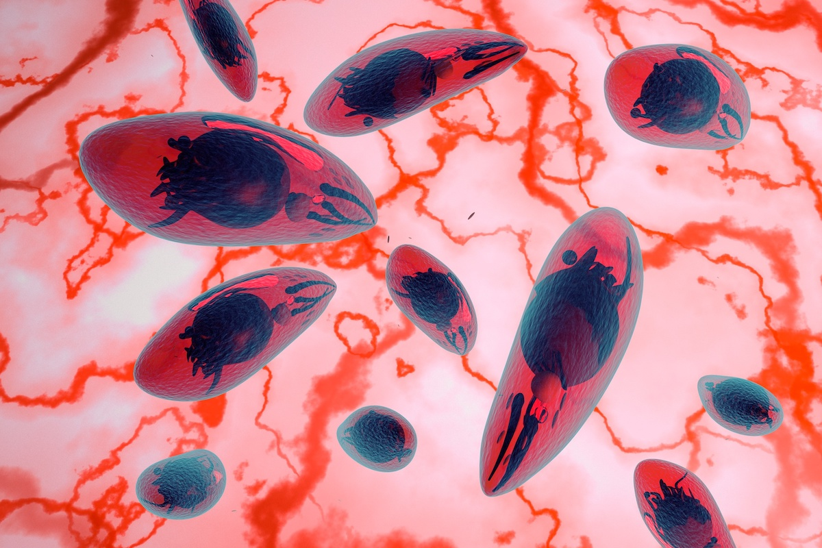 How I Lost My Partner to a Parasite - Quillette