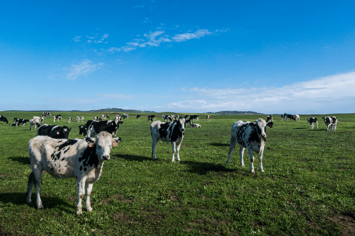 Local Farming Can't Save the Planet